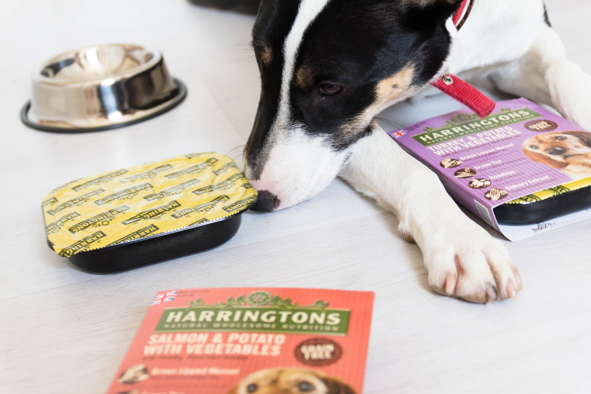 Harringtons Dog Party
