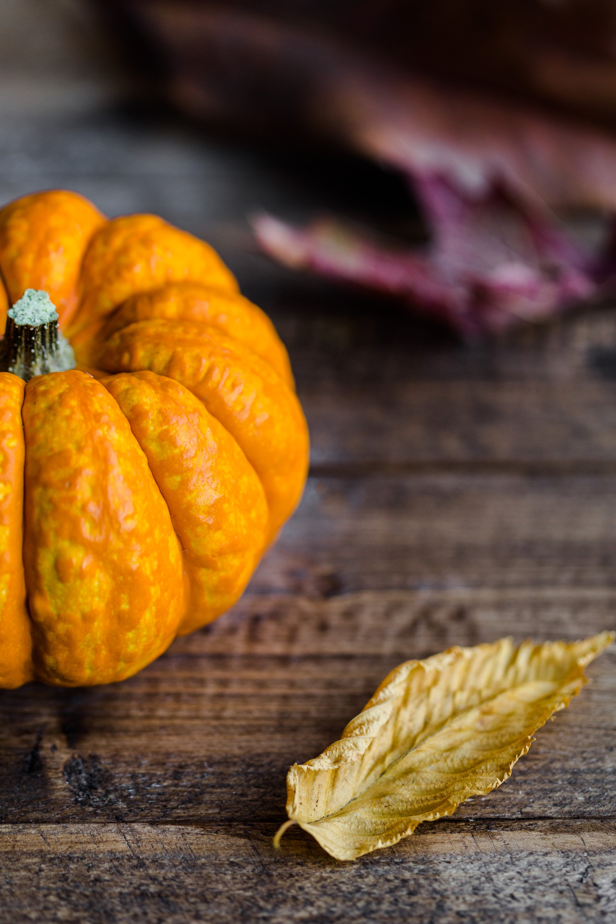 Top tips to give your garden a boost this Autumn 2
