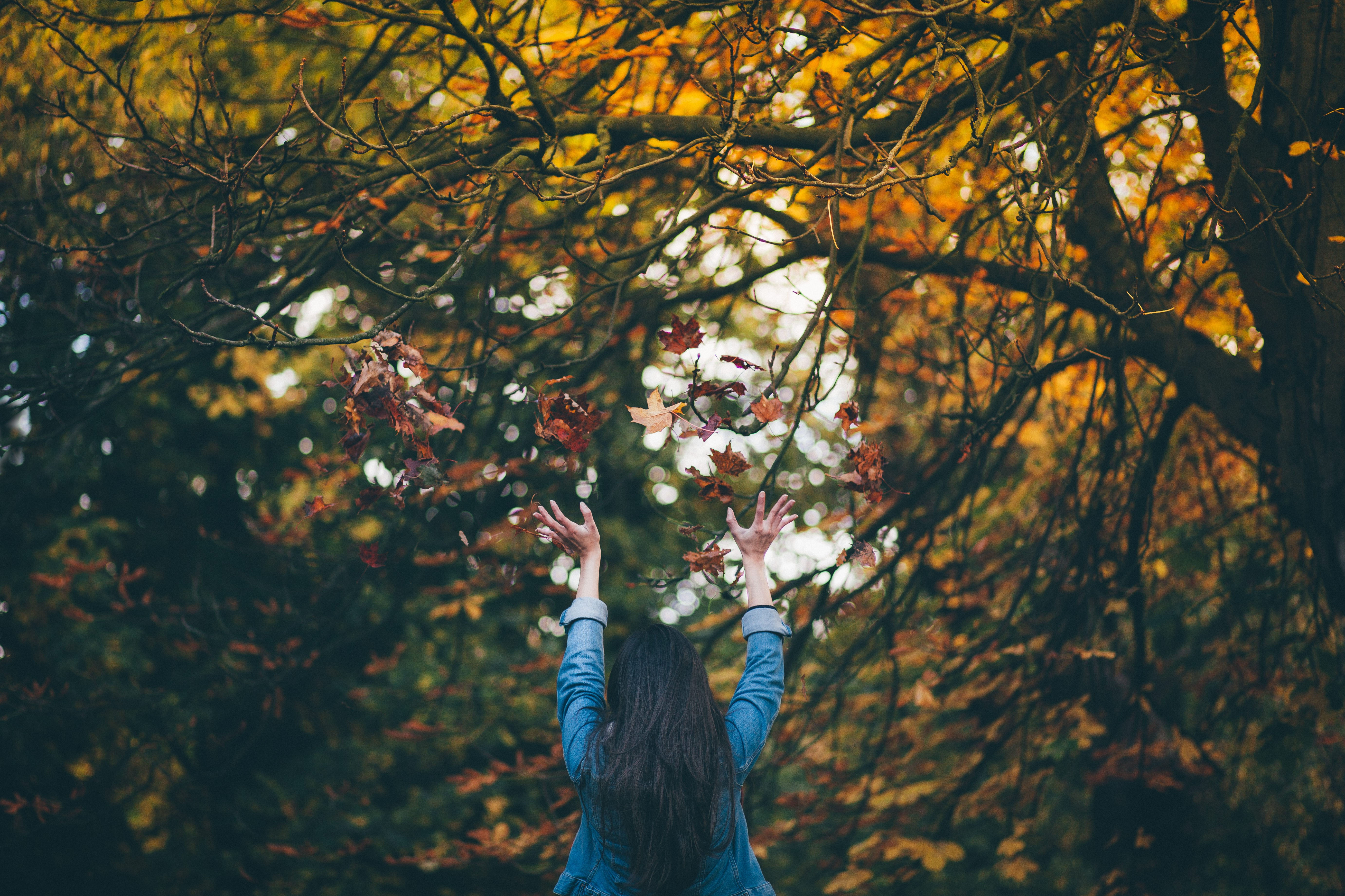 Top tips to give your garden a boost this Autumn 5