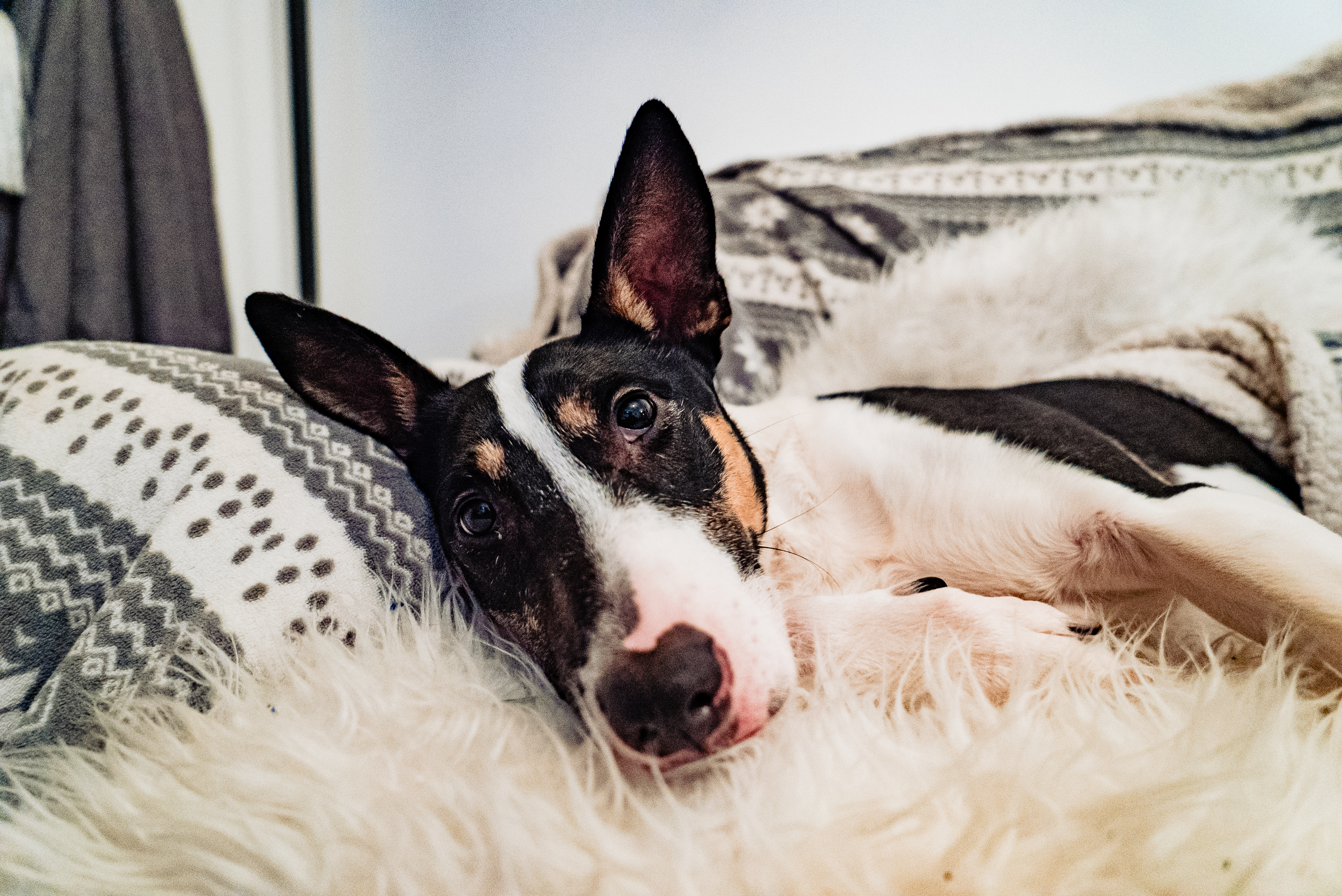 Top Tips for Becoming the Best Puppy Parent 1